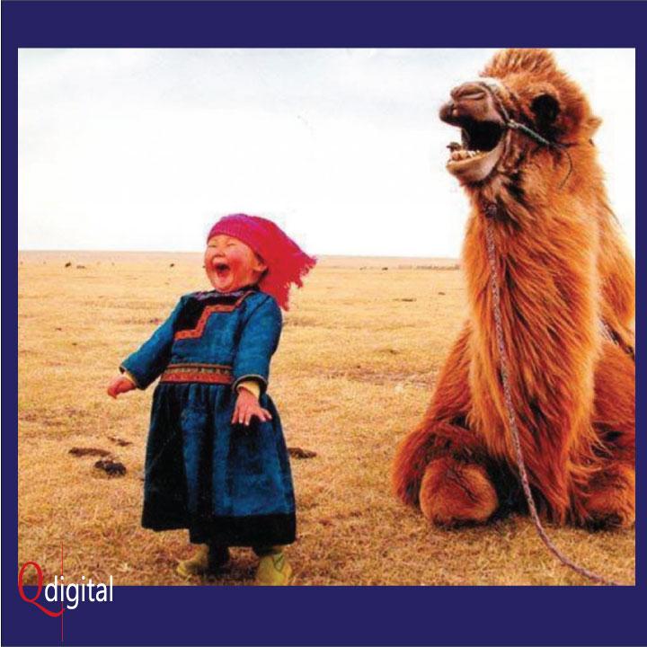 Social Comment Branding Qdigital Digital Marketing Agency Camel Laugh 3A 720x720px